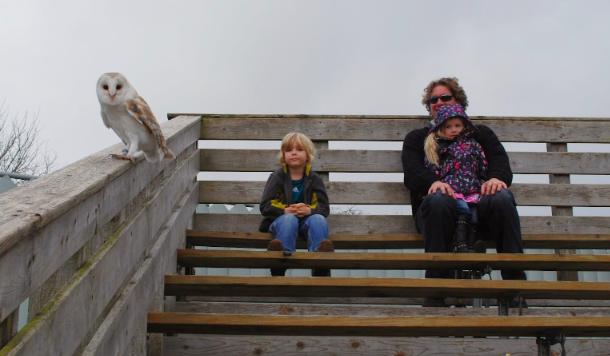 Ireland Road Tripping: Burren Birds of Prey, Aillwee Caves & CountyClare