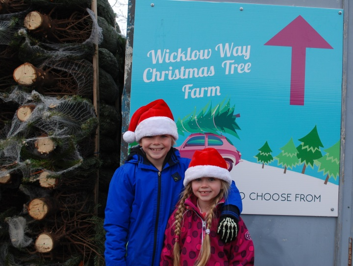 Wicklow Way Christmas Tree Farm