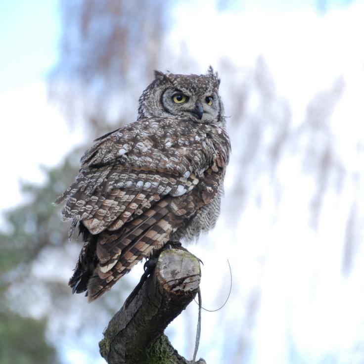 bird show owl best