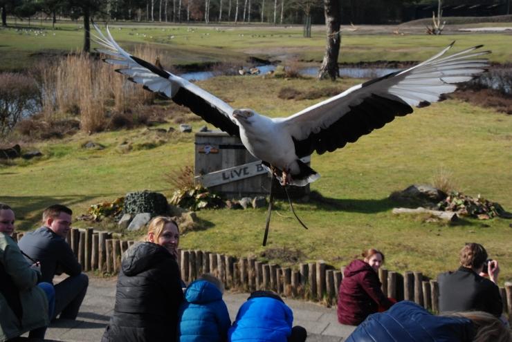 bird show5