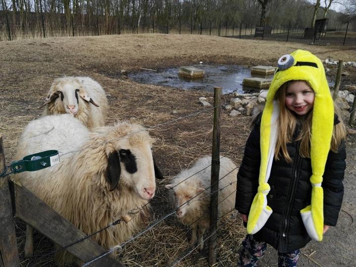 kinderboerij maebh and sheep