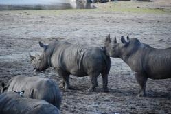 rhino starting a ight