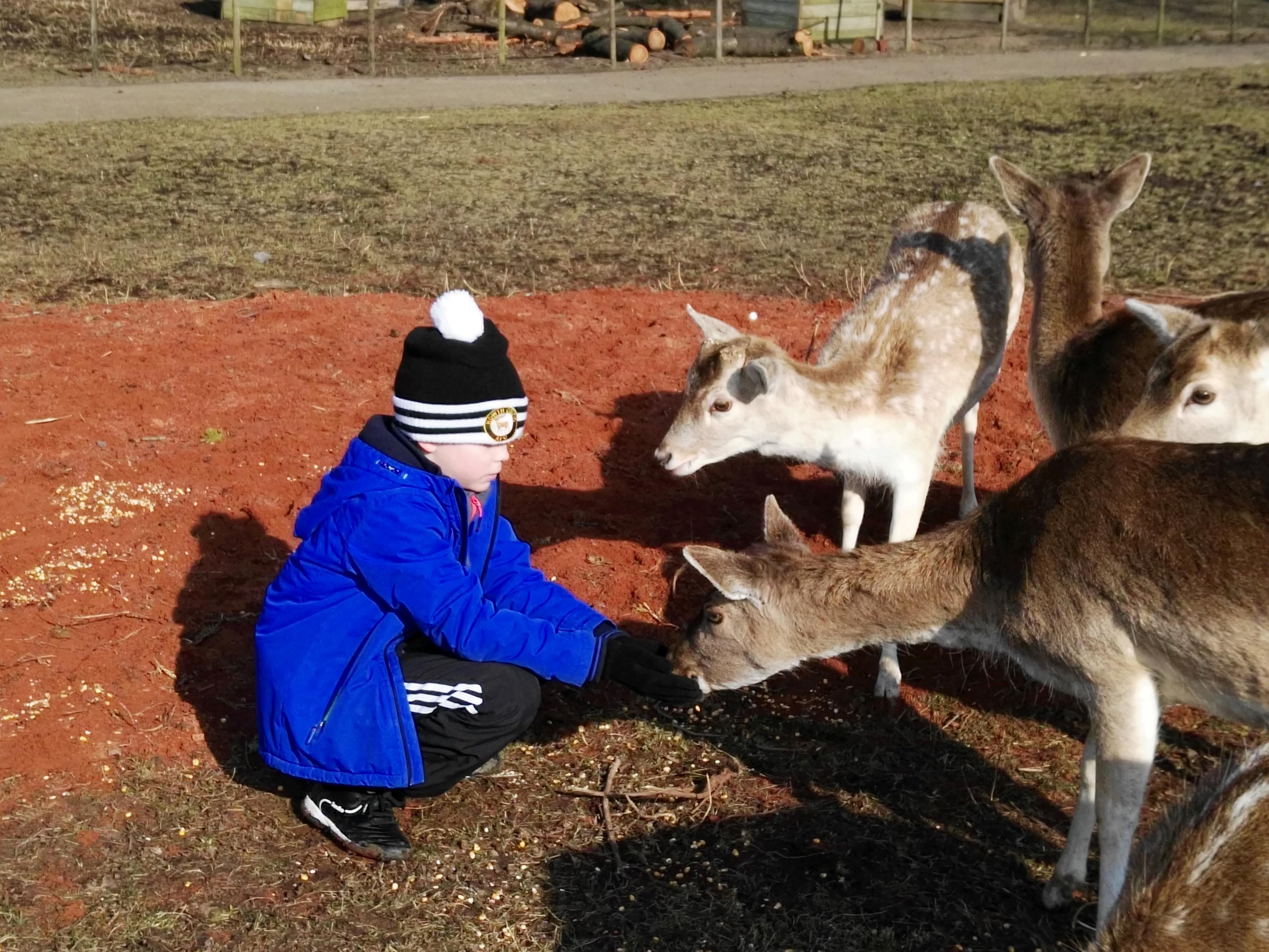 soren feeding deer