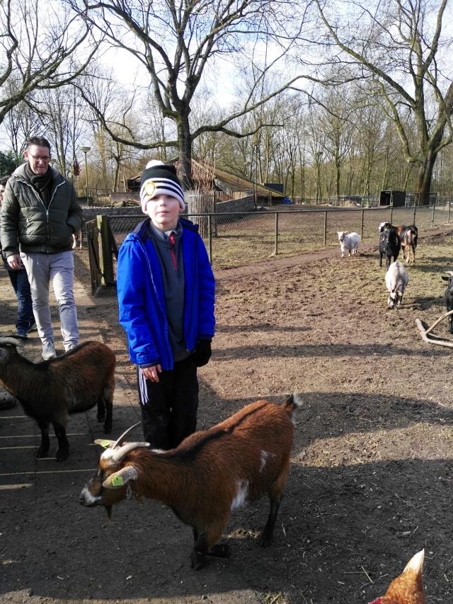 soren with goats