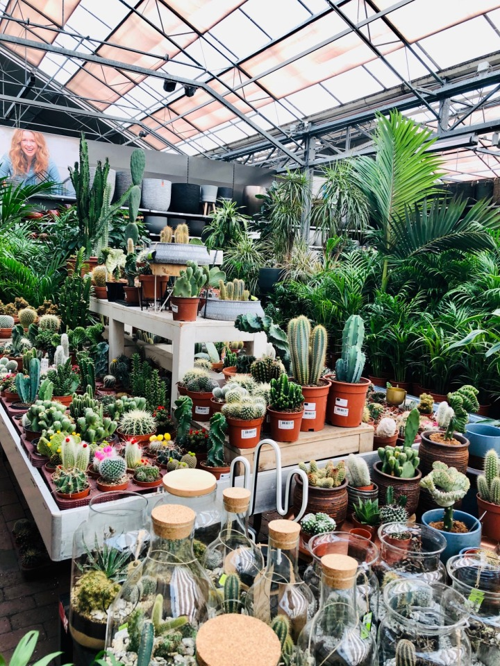 Intratuin:  More than just your average gardencenter.