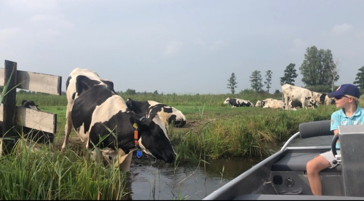 post soren cows